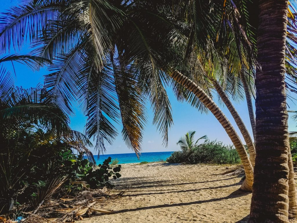 Puerto Rico Beach with Palm Trees