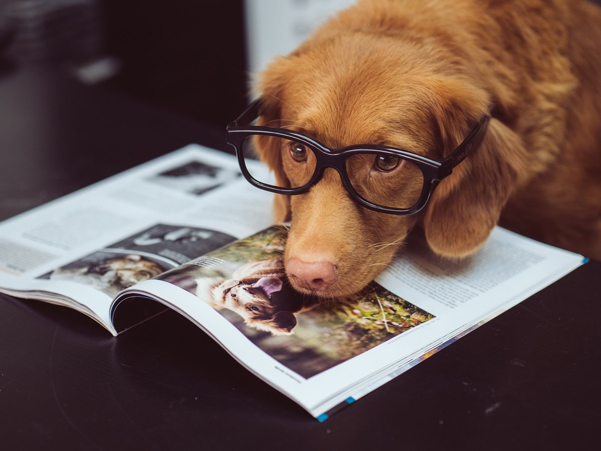 10 Tips to Boost Your Chances to Live with Your Pet